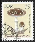 Sellos del Mundo : Europa : Alemania : Setas - Amanita pantherina