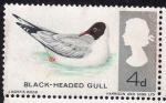 Stamps United Kingdom -  Gaviota de cabeza negra