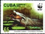 Stamps : America : Cuba :  COCODRILO  CUBANO.  CAPTURANDO  PRESAS.