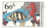 Sellos de Europa - Checoslovaquia -  fauna marina