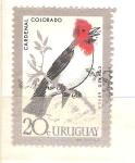 Stamps : America : Uruguay :  cardenal colorado RESERVADO