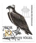 de Europa - Alemania -  Aves rapaces