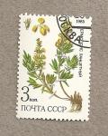 Sellos de Europa - Rusia -  Plantas medicinales de Siberia
