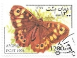 Stamps : Asia : Afghanistan :  Mariposa