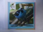 Stamps America - Colombia -  Dacnis Turquesa - Dacnis Hartlaubi. Risaralda Bird Festival 2018.