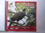 Sellos de America - Colombia -  Pava Caucana- Penelope Persppicax - Risaralda Bird Festival 2018.