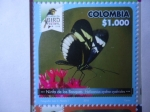 Sellos del Mundo : America : Colombia : Ninfa de los Bosques - Heliconius Cydno Cydnides - Risaralda Bird Festival 2018.