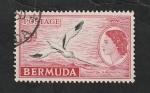 Stamps : America : Bermuda :  141 A - Phaeton flavirostris