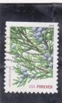 Stamps : America : United_States :  flores-Cedro Rojo Oriental