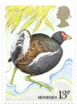 Stamps United Kingdom -  aves