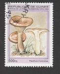 Stamps : Africa : Guinea :  Paxillus involutus