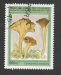 Stamps : Africa : Guinea :  Cantharellus lutescens