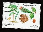 Stamps : Europe : Romania :  Pino silvestre