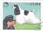 Stamps : America : Cuba :  PERROS DE RAZA