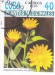 Stamps : America : Cuba :  plantas medicinales