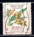 de America - Colombia -  orquídea