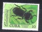 Sellos de America - Cuba -  coleóptero