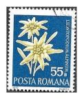 Sellos de Europa - Rumania -  2333 - Flores Protegidas