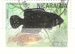 Sellos del Mundo : America : Nicaragua : cynolebias nigripinnis RESERVADO