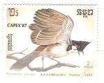 Sellos del Mundo : Asia : Camboya : pycnonotus jocosus