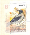 Sellos de Europa - Bulgaria -  corvus corone cornix