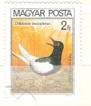 Stamps : Europe : Hungary :  chlidonias leucopterus