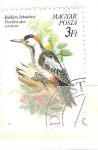 Stamps : Europe : Hungary :  dendrocopus syriacus RESERVADO