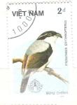 Stamps : Asia : Vietnam :  pteruthius erythropterus RESERVADO