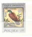 Sellos del Mundo : Europa : Polonia : falco tinnunculus