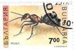 Sellos de Europa - Bulgaria -  insecto