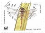 de Africa - Marruecos -  insectos
