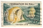 Stamps Africa - Ghana -  Chaetodon Luciae