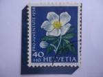 Sellos del Mundo : Europa : Suiza : Pro Juventute 1958- Rosa de Cristo- Christms Rose (Helleborus Niger)-Serie: Flores de prado y Jardín