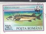 Sellos de Europa - Rumania -  WWF ACIPENSER