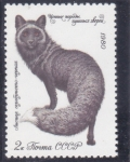Stamps Russia -  MUSTELIDO