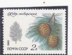 Stamps : Europe : Russia :  PIÑAS