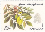 Stamps : Europe : Russia :  HOJAS