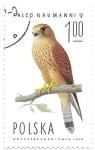 Stamps Europe - Poland -  halcones