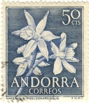 Sellos de Europa - Andorra -  Narcissus Pseudonarcissus
