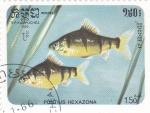 Stamps Cambodia -  PECES
