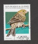 Stamps : Africa : Guinea :  Serinus canaria