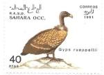Sellos de Africa - Marruecos -  aves