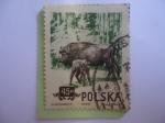 Sellos de Europa - Polonia -  Bisonte - Bisonte Europeo.