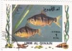 Sellos del Mundo : Asia : Emiratos_Árabes_Unidos : PECES TROPICALES