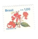 de America - Brasil -  Impatiens sp