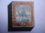 Stamps Africa - Sudan -  Correo - Cartero con Dromedario (Camelus dromedarius) - Serie: Temas de Sudán.