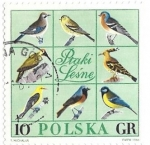 Stamps : Europe : Poland :  aves