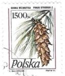 de Europa - Polonia -  flores