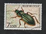 Stamps : Europe : Belgium :  1736 - Fauna, Carabus auratus L.