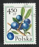 Stamps : Europe : Poland :  2321 - Fruto, Prunus spinosa